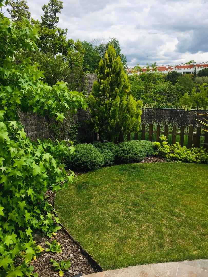 pequeño jardín tempranales